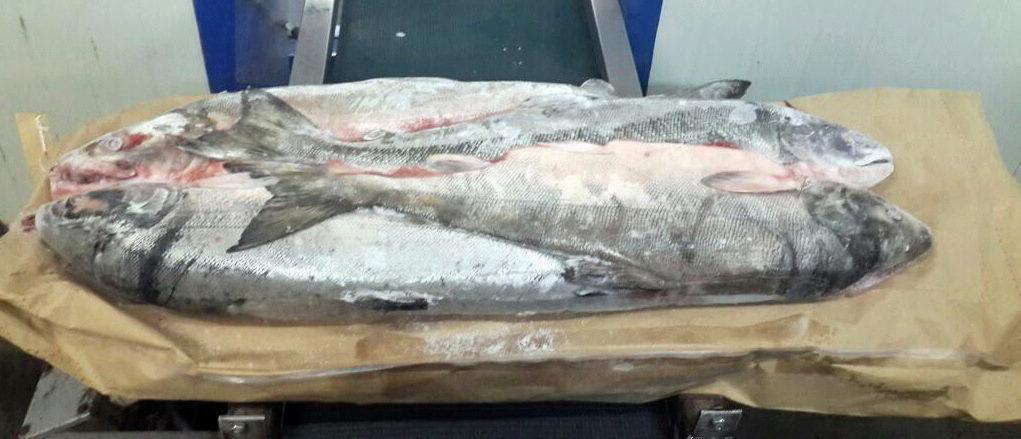 Цены на рыбу курган